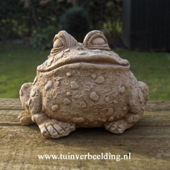 Fred Frog