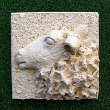 Mountain Ewe